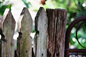 garden-433349_640(1)